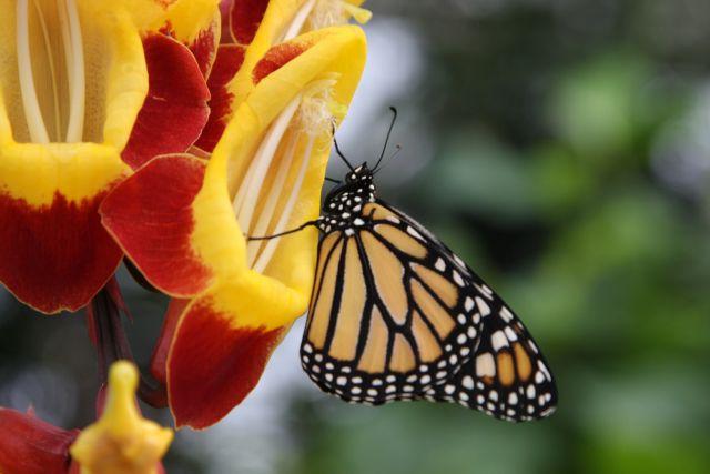 Butterflies travelers at Botanic Garden Prague