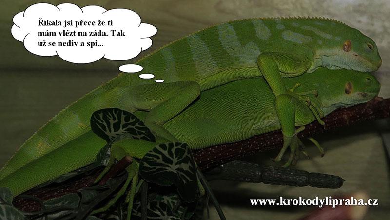 Krokodyli Praha6