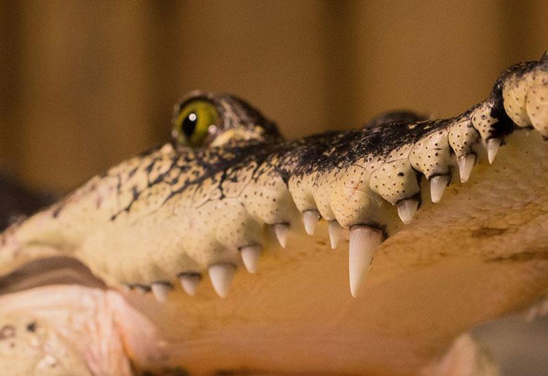 Krokodyli Praha7
