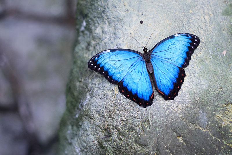 Butterfly Praha 6