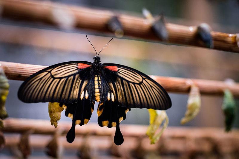 Butterfly Praha 9