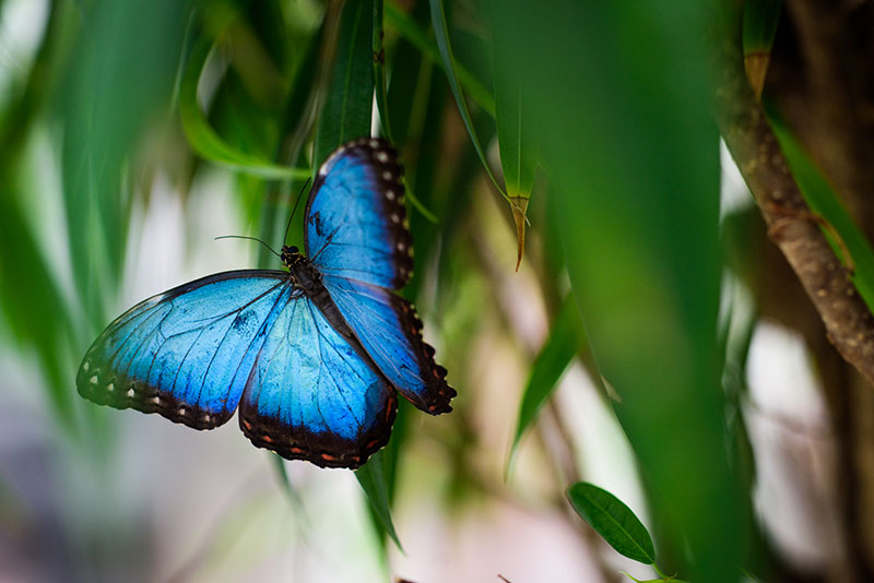 Butterfly Praha Papilonia 7